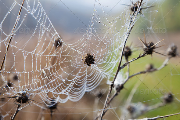Cobweb with dew - Stock Photo - Images