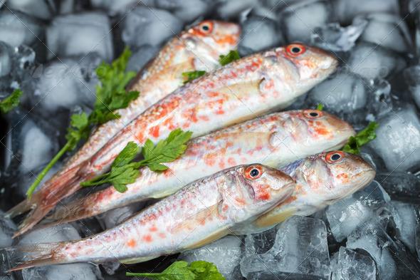 Fresh fish - Stock Photo - Images