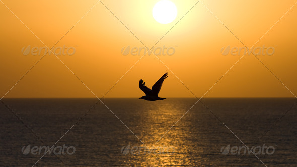 A silhouette of a seagull - Stock Photo - Images