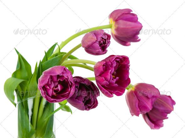 Tulips bouquet closeup - Stock Photo - Images