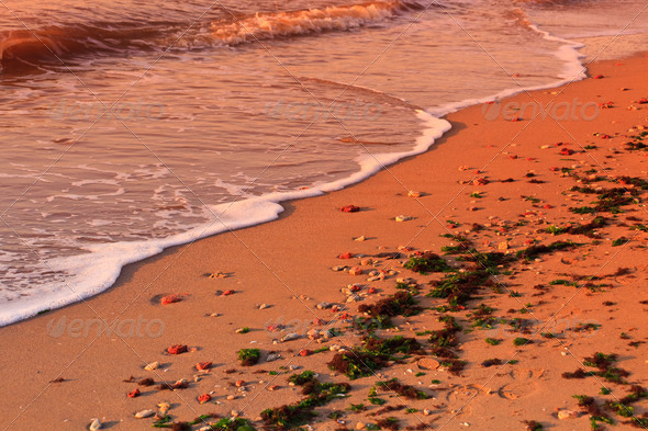 wild beach - Stock Photo - Images