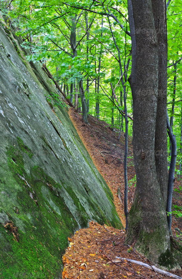 wall mountain in the forest - Stock Photo - Images