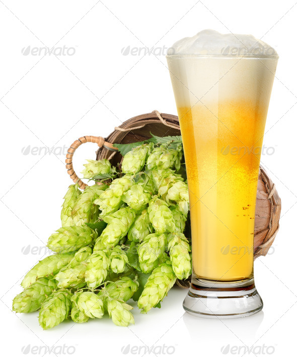Light beer and hop in basket - Stock Photo - Images