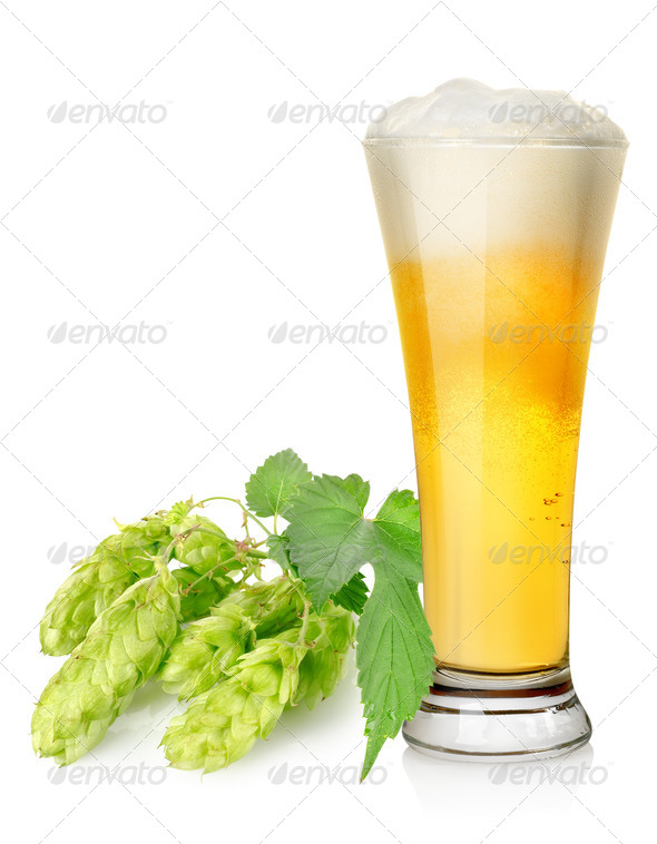 Light beer and hop - Stock Photo - Images