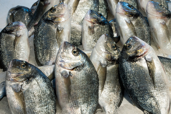 Dorado fish for sale - Stock Photo - Images