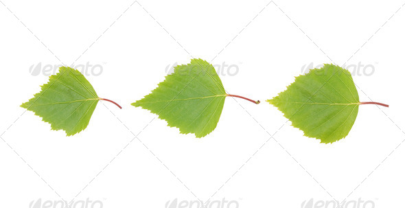 Three green leaves. - Stock Photo - Images