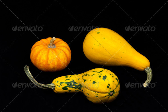 decorative pumpkins - Stock Photo - Images