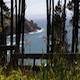 Ocean Through Trees - VideoHive Item for Sale