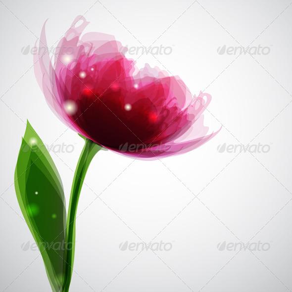 Pink Peony - Flowers & Plants Nature