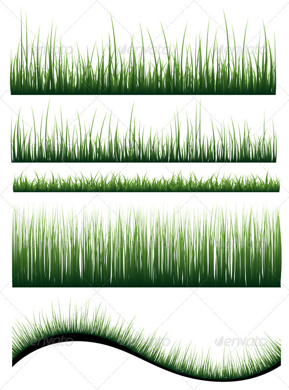 Grass - Flowers & Plants Nature