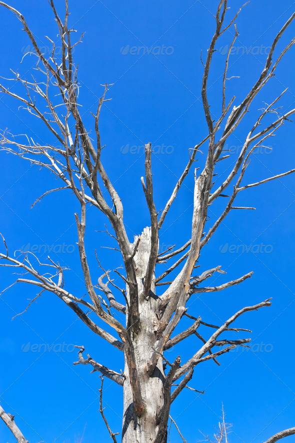 dry tree - Stock Photo - Images