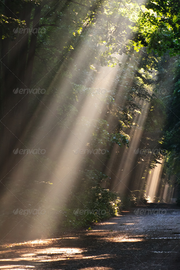 sun fog in forest - Stock Photo - Images
