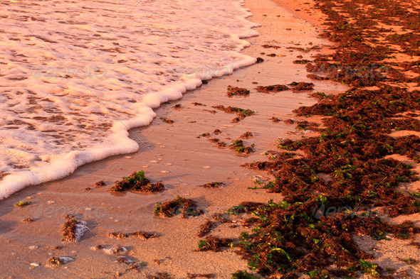 beach wave - Stock Photo - Images
