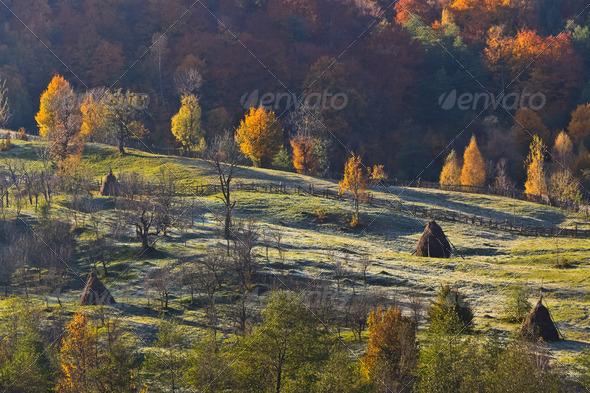 autumn pasture - Stock Photo - Images