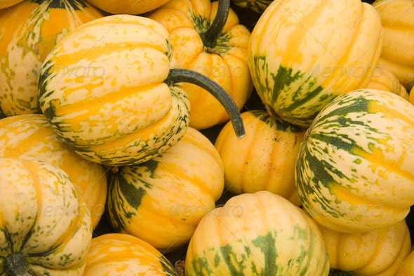 Gourds - Stock Photo - Images