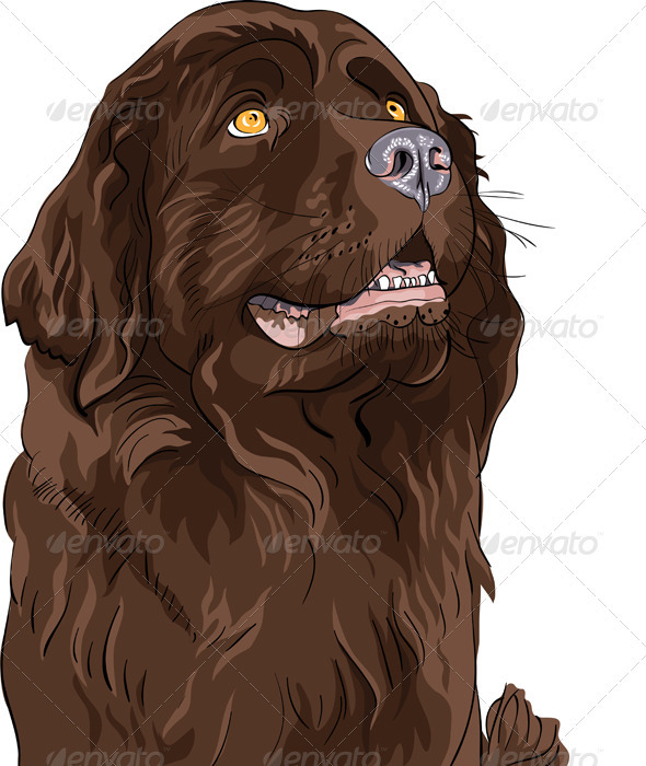Vector Sketch Dog Newfoundland Hound Breed - Animals Characters