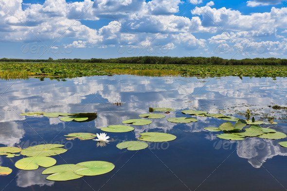Danube Delta, Romania - Stock Photo - Images