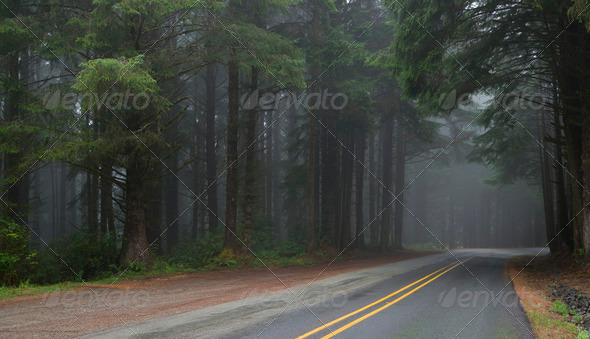 Through the Woods - Stock Photo - Images