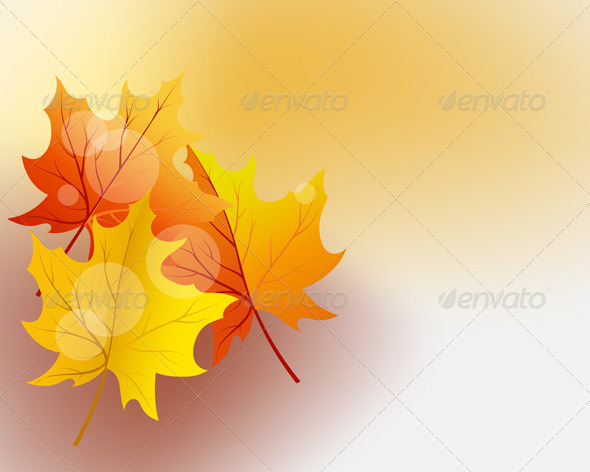 Autumn Maples - Seasons Nature