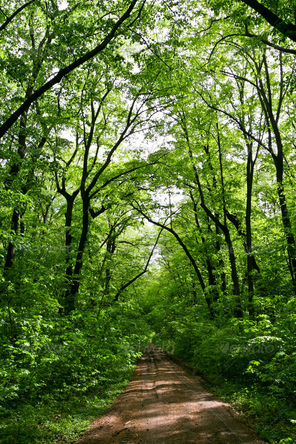 forest green - Stock Photo - Images
