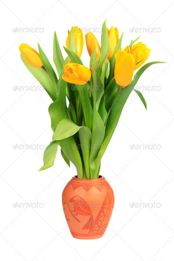 Yellow tulips in a clay pot - Stock Photo - Images