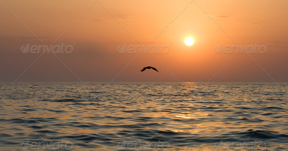 Seagull soaring over the sea at sunset - Stock Photo - Images