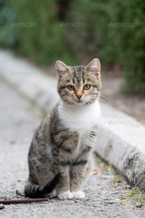 Small kitten - Stock Photo - Images