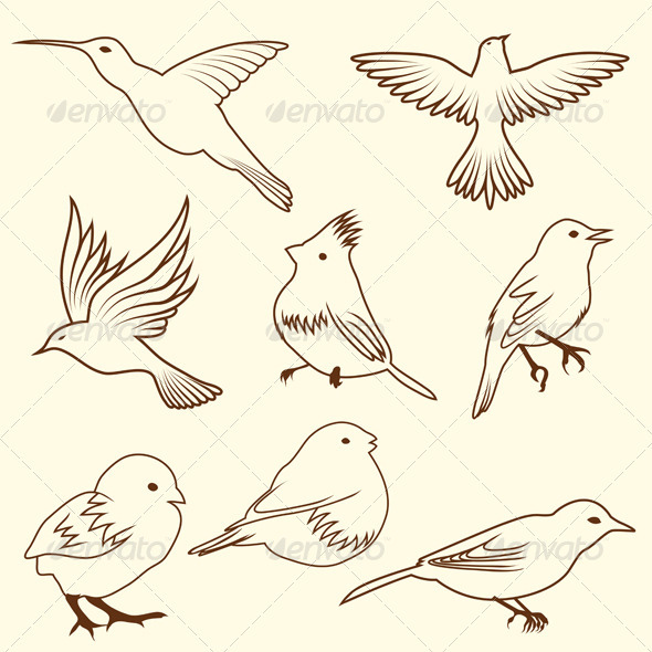Set of Different Bird Sketches - Animals Characters