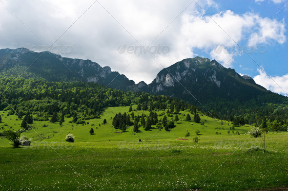 green grass field - Stock Photo - Images