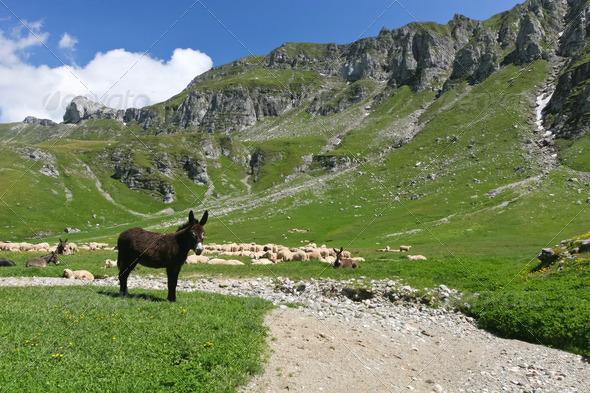 donkey - Stock Photo - Images