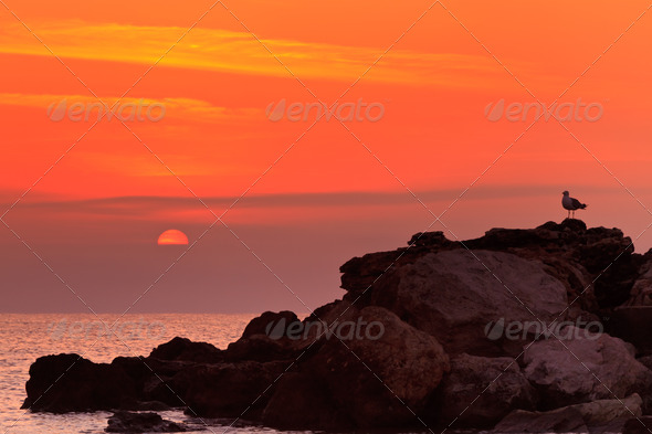 sunrise on a rocky shore - Stock Photo - Images
