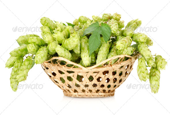 Hops in a basket isolated - Stock Photo - Images