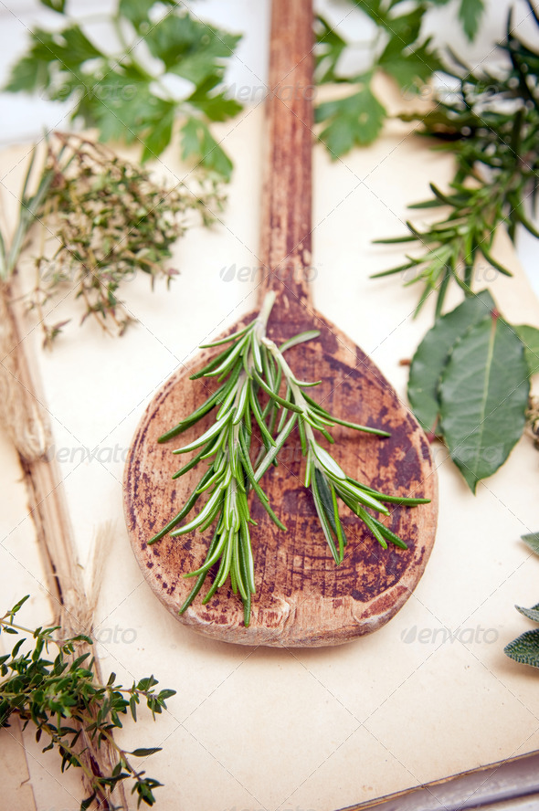 Rosemary herb - Stock Photo - Images