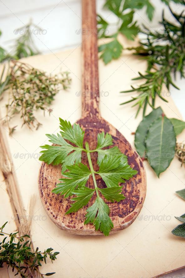 Fresh celery - Stock Photo - Images