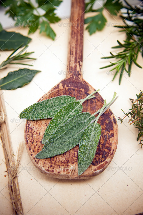 Fresh sage leaves - Stock Photo - Images