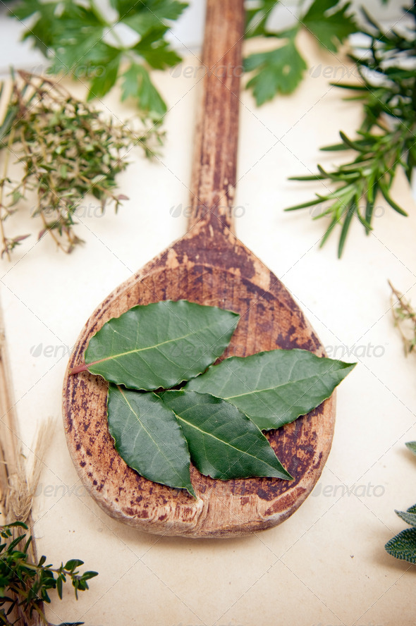 Fresh bay leaves - Stock Photo - Images