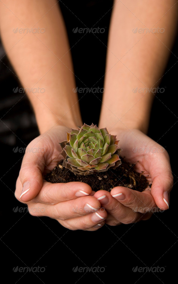 Plant in her hands - Stock Photo - Images