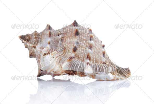 beautiful seashell - Stock Photo - Images