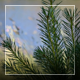 Young Pine At The River - VideoHive Item for Sale