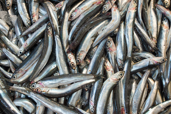 Anchovies for sale  - Stock Photo - Images