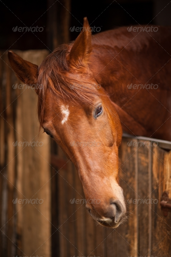 Horse Profile - Stock Photo - Images