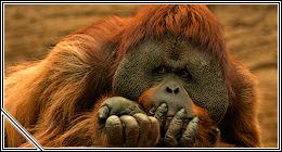 Photos: Mammals