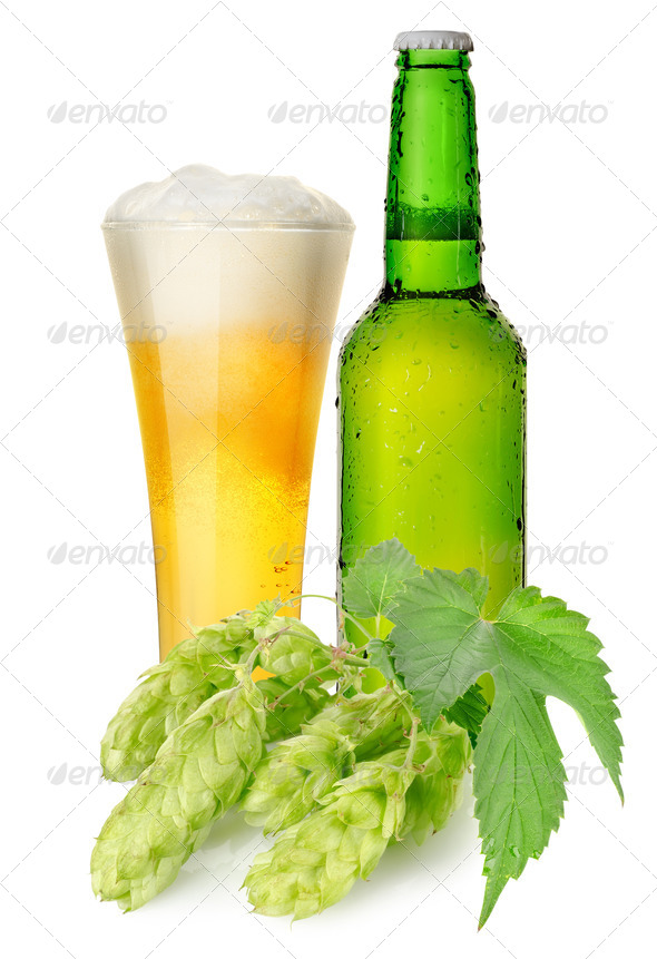 Beer and hops - Stock Photo - Images