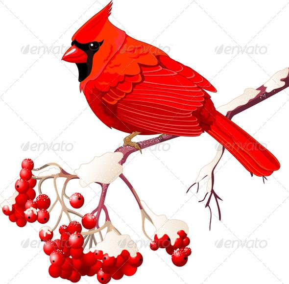 Red Cardinal Bird - Animals Characters