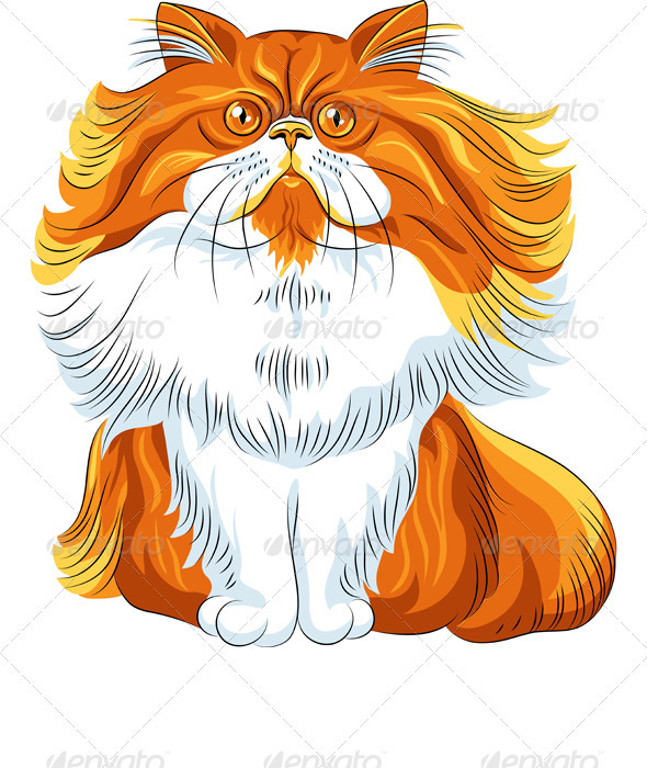 Vector Color Sketch Fluffy Persian Cat  - Animals Characters