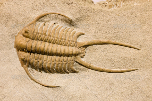 Trilobite fossil with thorns - Stock Photo - Images
