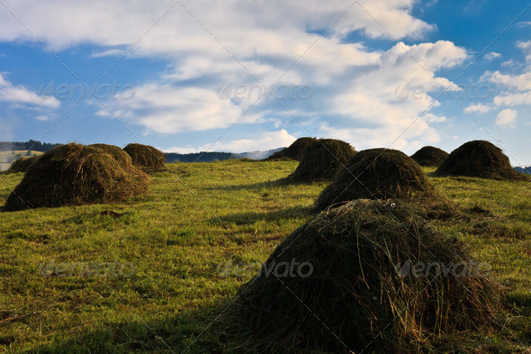 rustic field - Stock Photo - Images