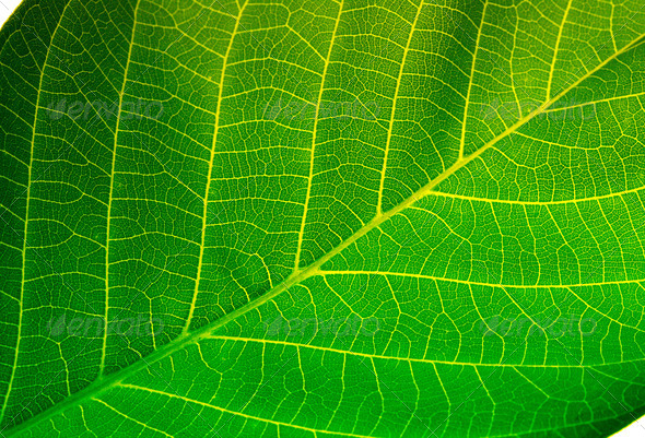 green leaf background - Stock Photo - Images
