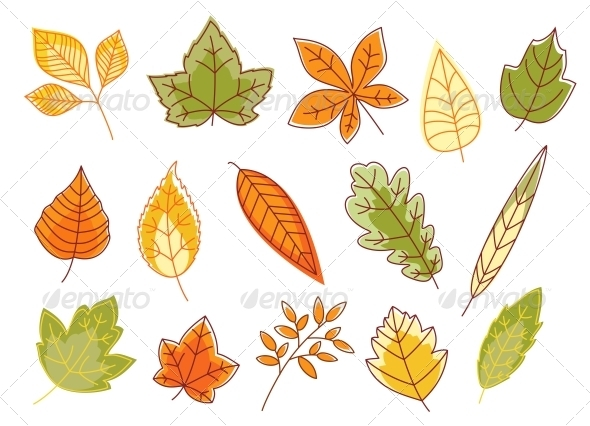Autumnal Colorful Isolated Leaves - Seasons Nature