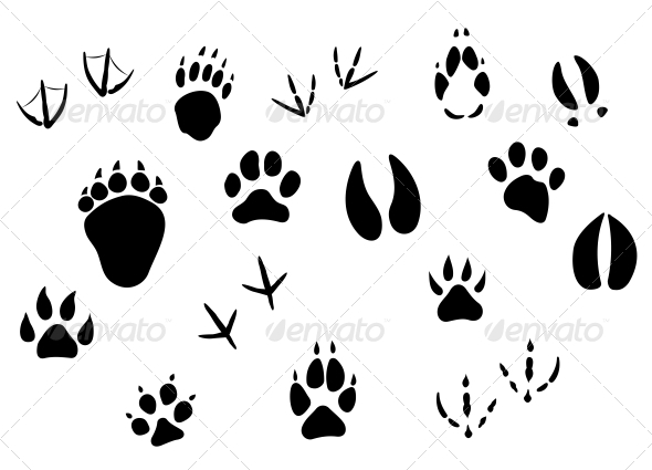 Animal Footprints and Tracks - Animals Characters